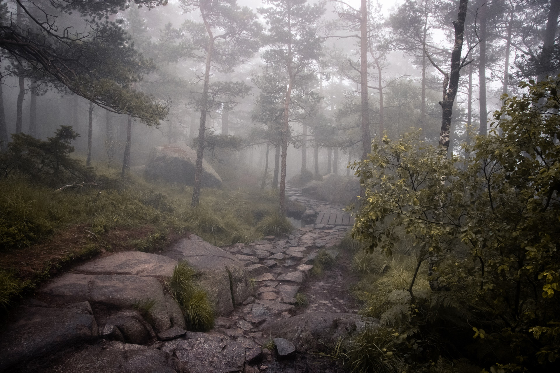 traveling foggy forest