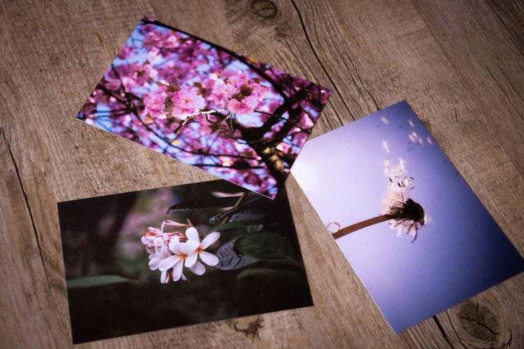 Drei Postkarten mit Blumenmotiven