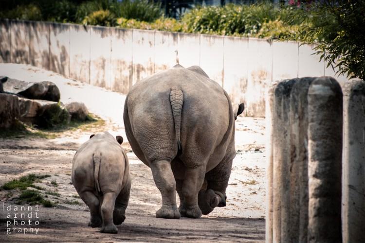 Nashorn hinten / Rhino back - Tierprints / Animal Prints