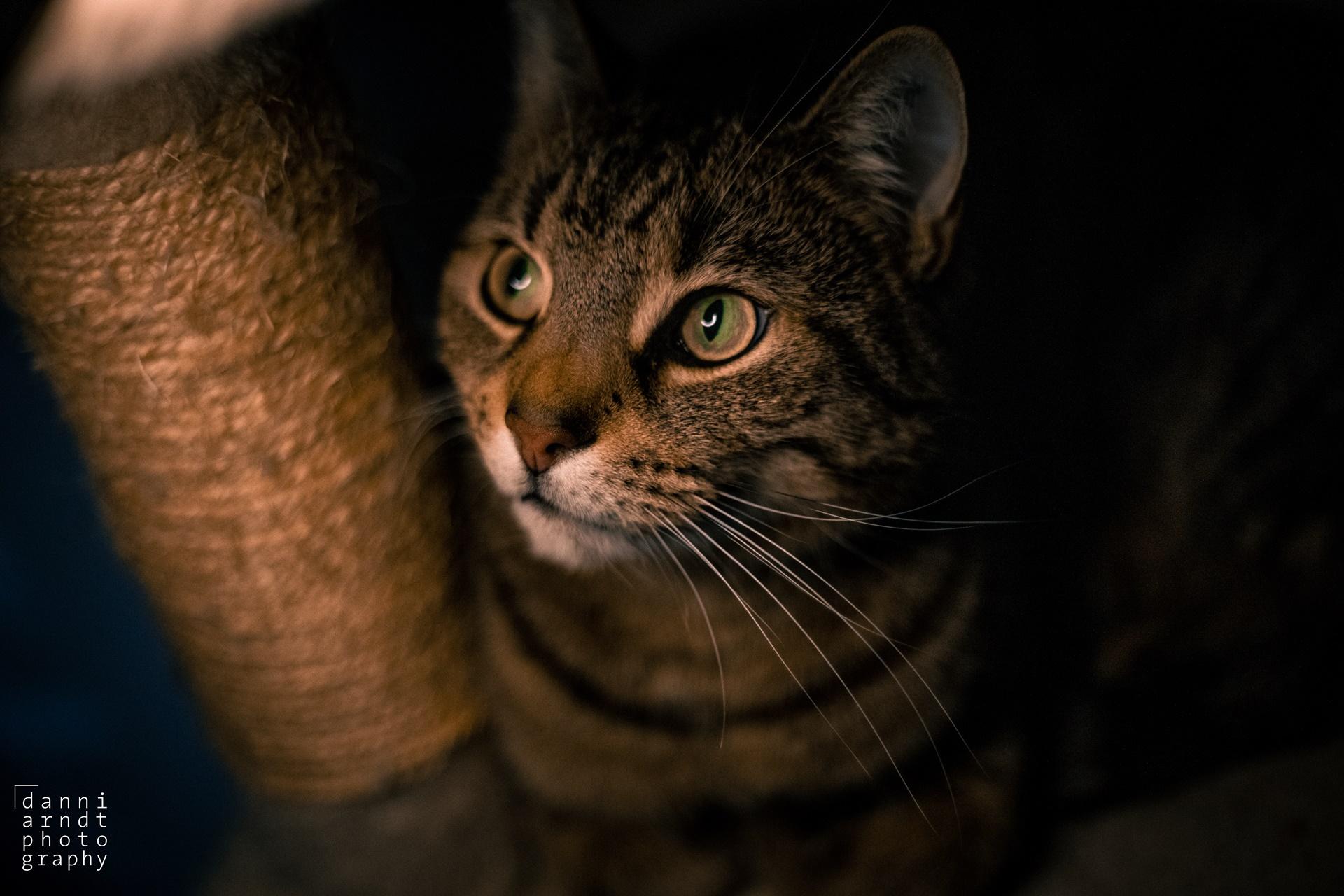 Cat ring light