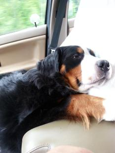 best road trip companion