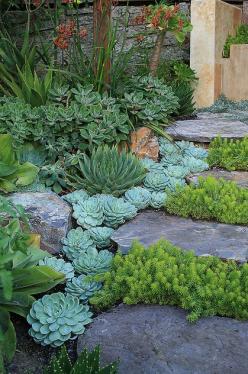 Succulent & Cactus Walkway