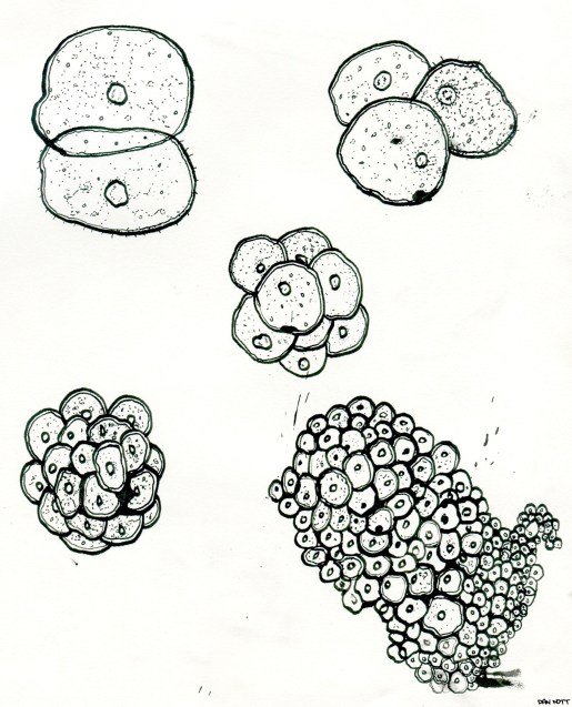 Second drawing I've done with dip pen. The idea is to show cancer at a micro level.