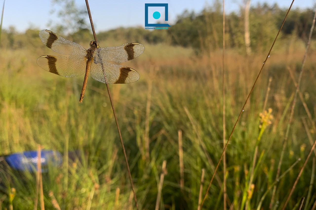 Libellen fotograferen in Den Diel, met volgens Hilde mijn coole body :-)