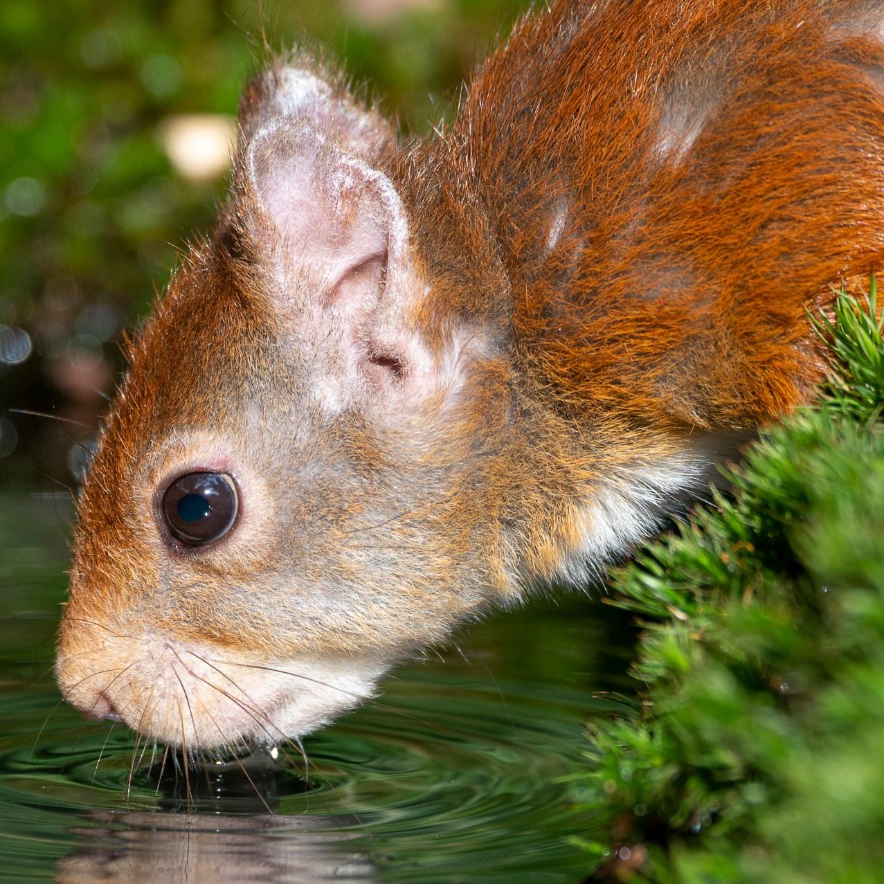 Lightroom preset 'zoogdieren verscherpen' - originele foto