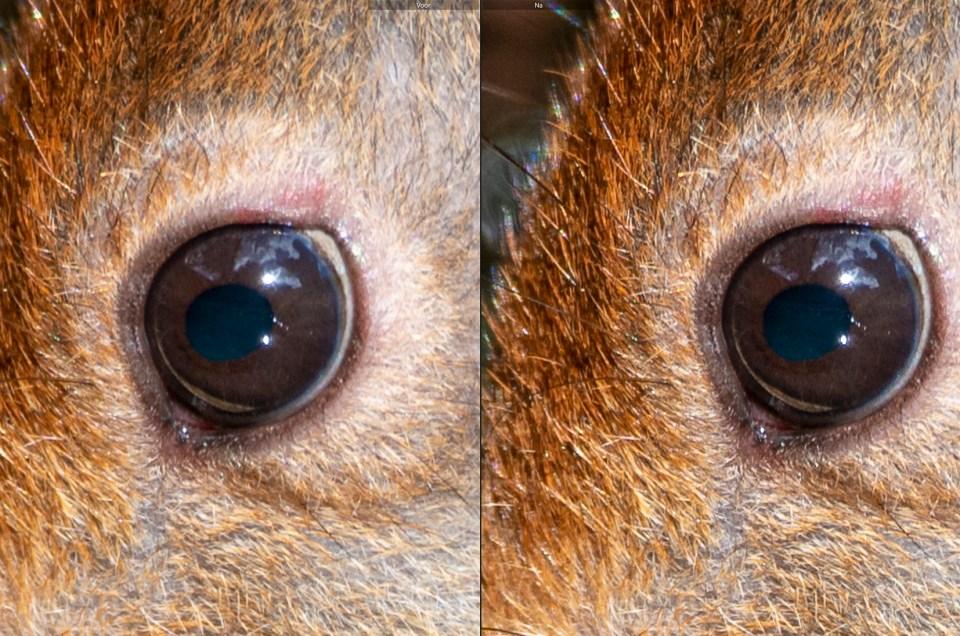 Gratis Lightroom presets: zoogdieren verscherpen