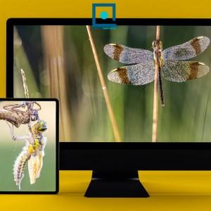 Webinar macrofotografie libellen