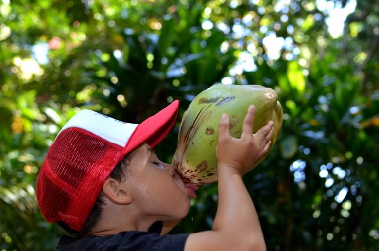 levi-coconut