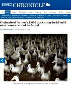 rp_Essex-Chronicle-ducks.jpg