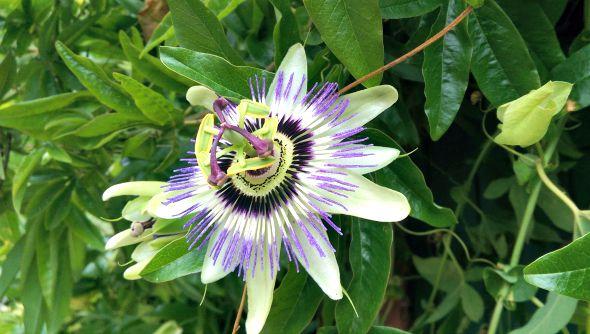 My Sunday Photo - Walled Garden flower