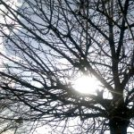 Sunshine through the trees – square