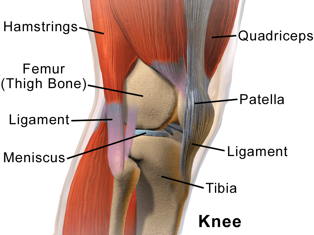 Easing Joint Pain - The knee taken from Wikimedia