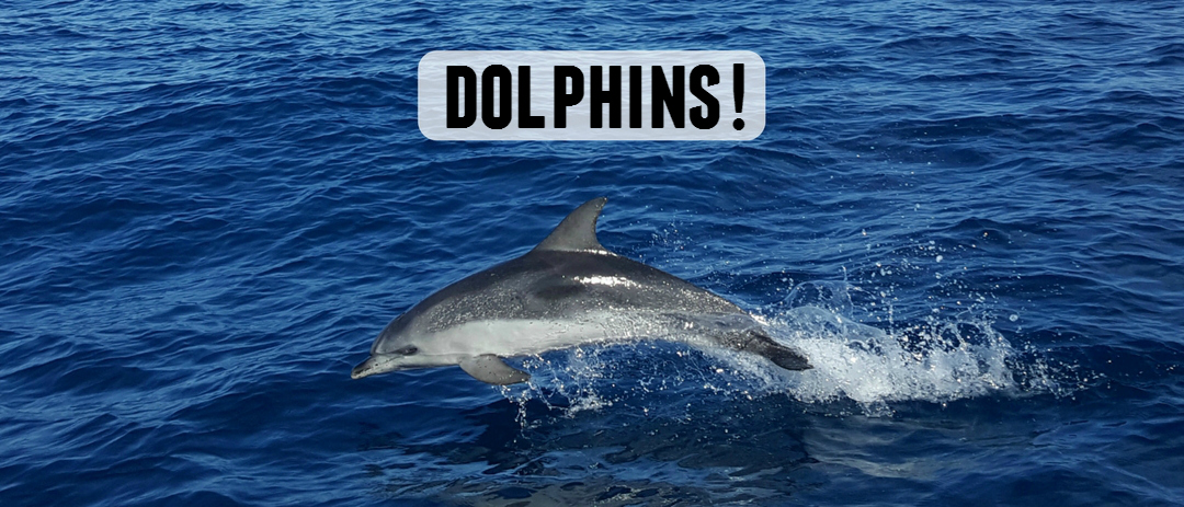 Watching dolphins in Tenerife with Flipper Uno