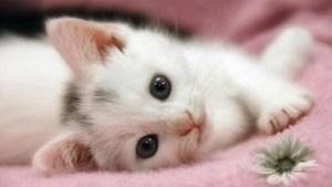 A kitten lying on its side.