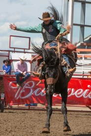 Panoka Rodeo 781