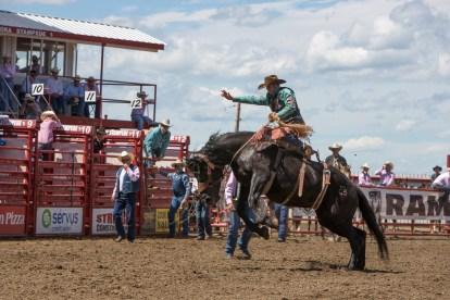 Panoka Rodeo 784