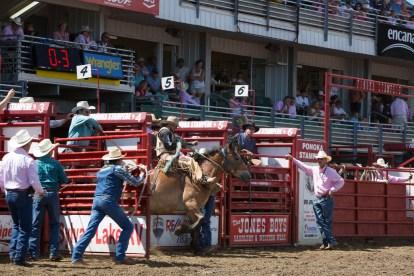 Panoka Rodeo 791