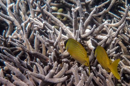 great_barrier_reef-26