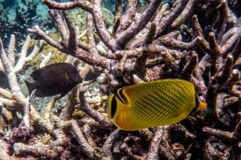 great_barrier_reef-30