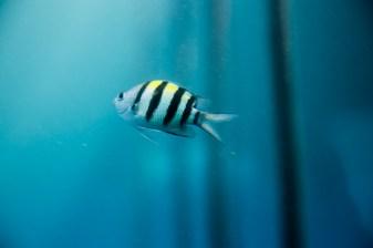 great_barrier_reef-3