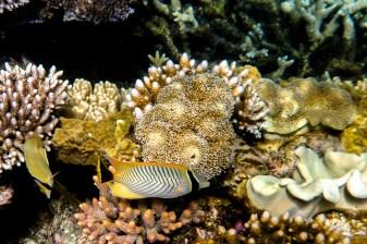 great_barrier_reef-42