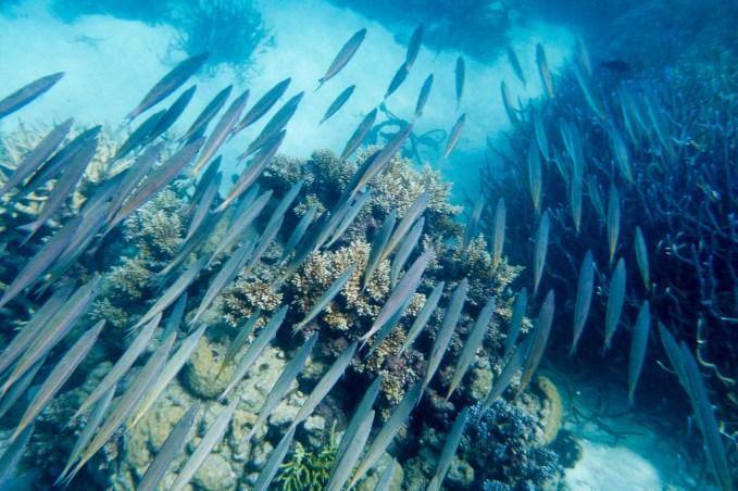 great_barrier_reef-56