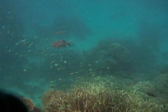 great_barrier_reef-6