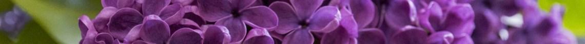 Blomster #1