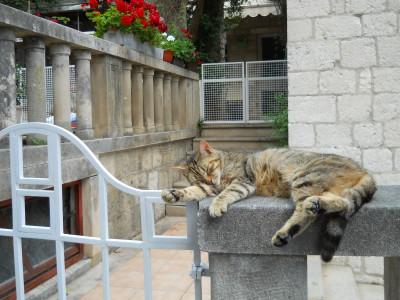 Weer zo'n artikel over slapen – maar dan anders