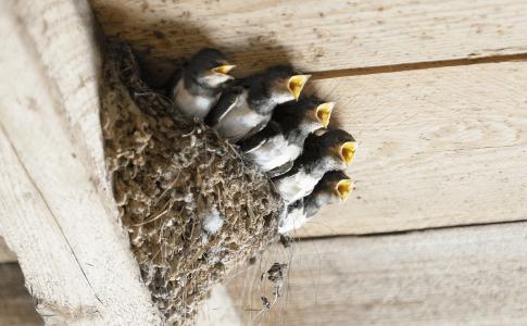 燕の巣 食べ物