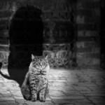 Gå mod katten – stof til eftertanke
