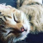 Opdatering på katten