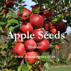 Apple Seeds dan skognes motivation blogger speaker teacher trainer coach educator