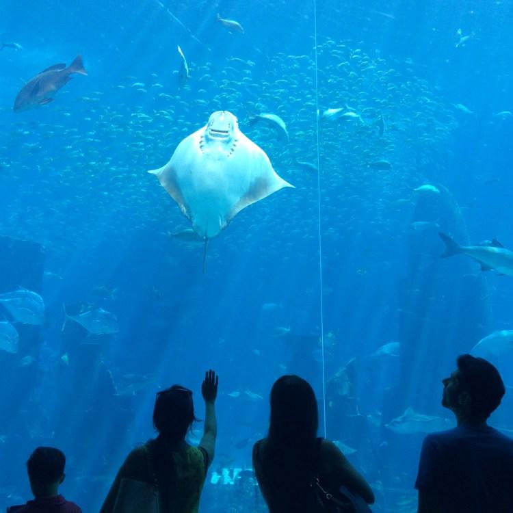 Que faire absolument à Dubaï bonnes adresses et excursions dubaï Atlantis hotel