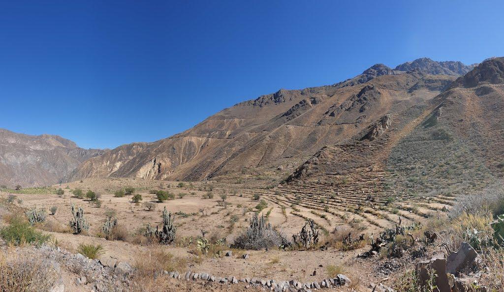 Canyon de Colca terrasses