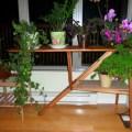 Fleur d 39 aloe vera rare floraison d 39 une plante d 39 int rieur - Comment passer en floraison ...