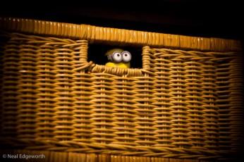 """""""Jour 125 - On dirait que Dave a été kidnappé."""" (Crédits : Flickr/CC/nealedgeworth)"""