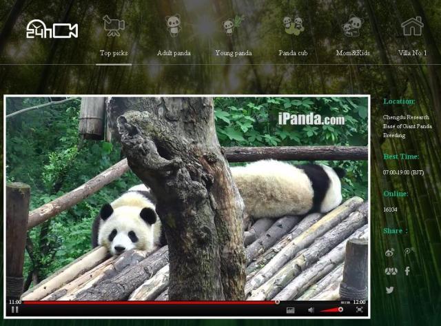 Panta TV 3