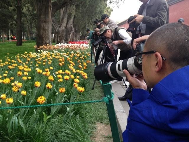 Lalele in Parcul Zhong Shan 2014 10