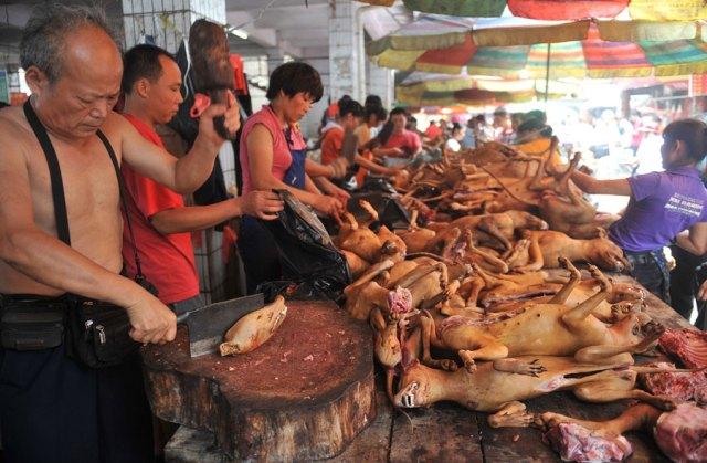 Festivalul carnii de caine 1