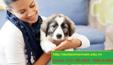 trung cấp chăn nuôi thú y tại gia lai