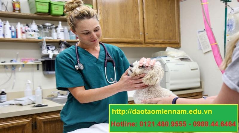 trung cấp chăn nuôi thú y tại quận 4
