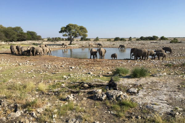 waterhole-okaukuejo-rest-camp-etosha-namibie-olifanten