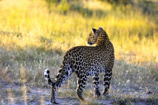 gouden uurtje safari afrika