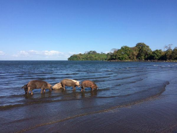 playa santa domingo isla de ometepe