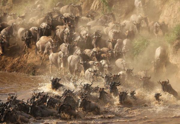 migratie-tanzania-mara-rivier