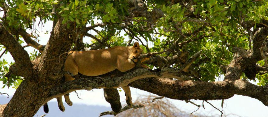 15 fotos waardoor jij nu naar de serengeti in Tanzania wil