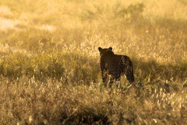 Botswana de Okavango Delta Moremi Game Reserve