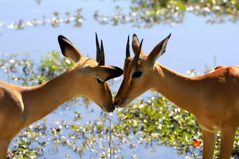De mooiste bezienswaardigheden Namibie voor je op een rijtje