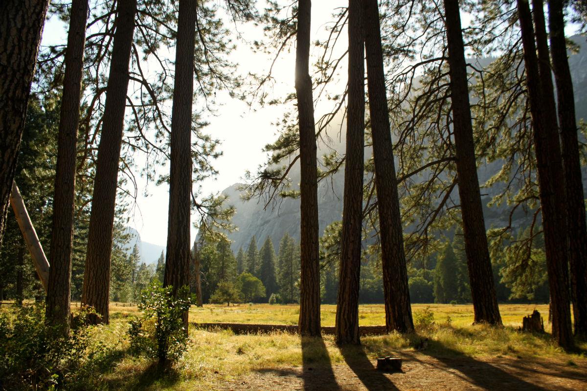 Bezoek het prachtige Yosemite National Park tijdens je rondreis West Amerika